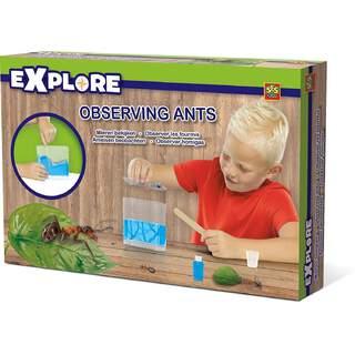 Explore Observing Ants